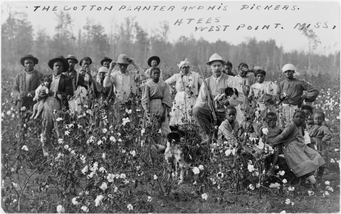 young or old you work in the cotton field